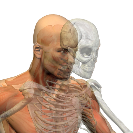 medical scan: Conceptual Anatomy human body on white background Stock Photo