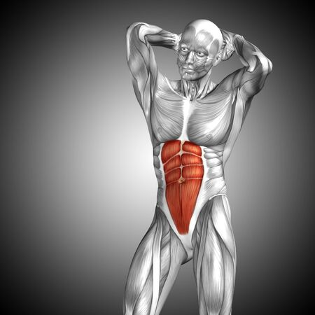 Conceptual 3D chest anatomy muscle on gray background Stock Photo