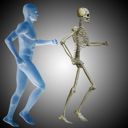 Conceptual 3D human man with bones for anatomy, medicine or health, gray background