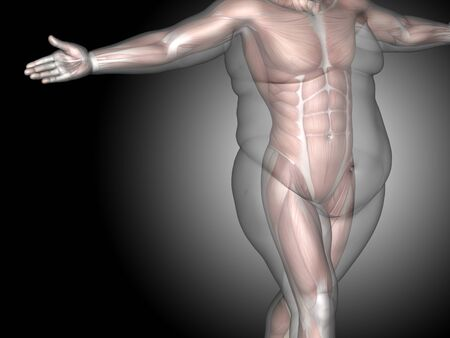 Concept or conceptual 3D fat overweight vs slim fit diet with muscles young man gray gradient background