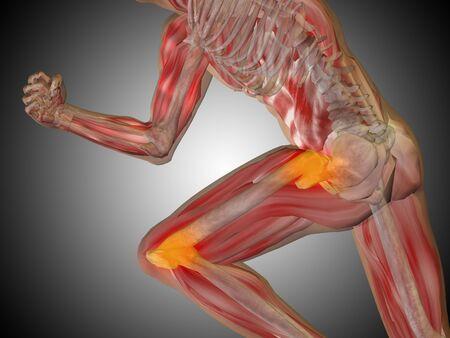 shin: Conceptual human body anatomy articular pain on gray background Stock Photo