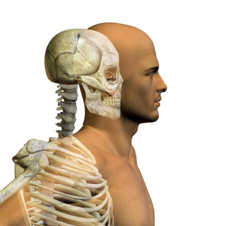 Conceptual Anatomy human body on white background Stock Photo