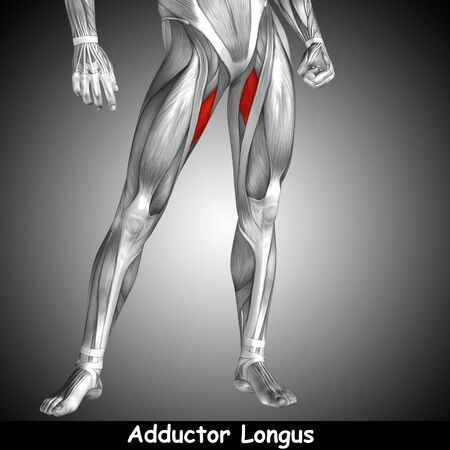human leg: Conceptual 3D human front upper leg muscle anatomy and text on gray background Stock Photo