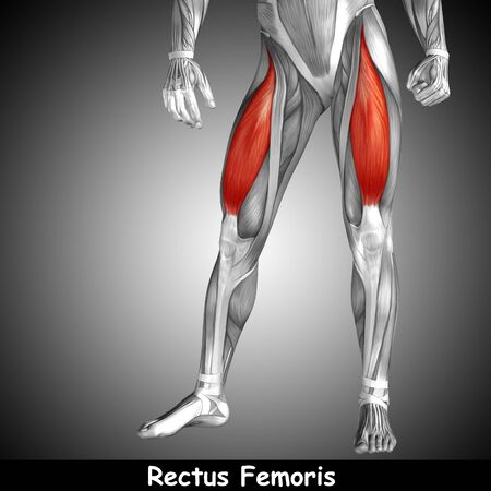 tensor: Conceptual 3D human front upper leg muscle anatomy and text on gray background Stock Photo