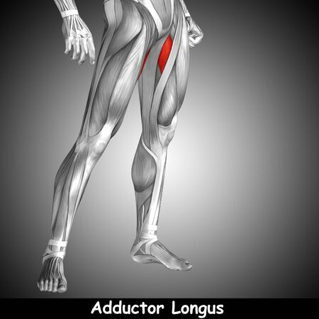 Conceptual 3D human front upper leg muscle anatomy and text on gray background Stock Photo
