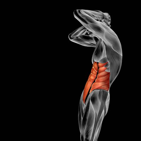 Conceptual 3d Chest Anatomy Muscle Isolated On Black Background