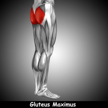 gastrocnemius: Conceptual 3D human back upper leg muscle anatomy on gray background Stock Photo