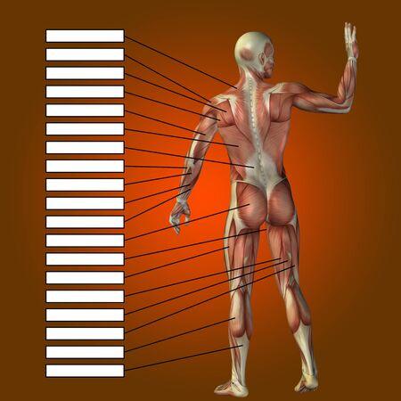 3D Menschliche Männliche Anatomie Mit Muskeln Und Textfeld Auf Rotem ...