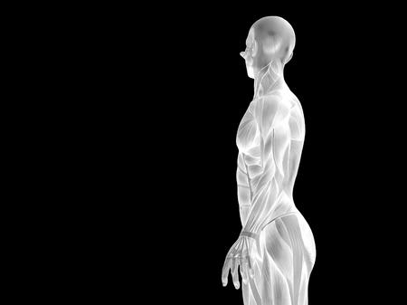 Conceptual human body anatomy isolated on black background Zdjęcie Seryjne