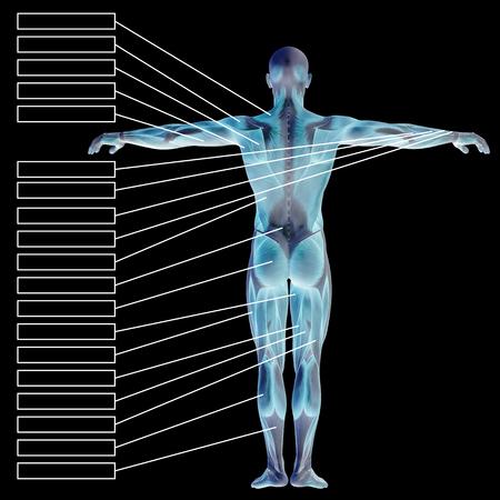 筋肉と黒の背景上に分離されてテキスト ボックスが 3 D の人間男性の解剖学