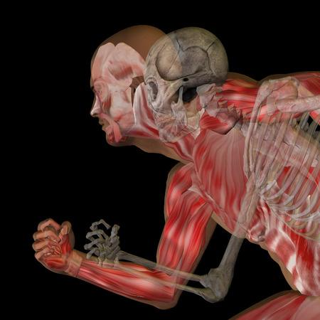 Cuerpo humano de la anatomía conceptual sobre fondo negro Foto de archivo