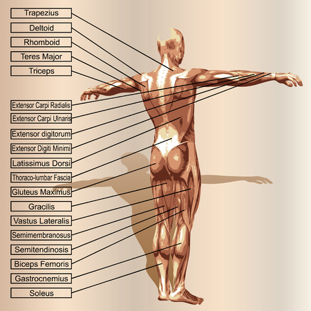 Vector 3D human male composition with muscles and text on beige backdrop Illustration