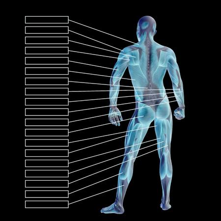 筋肉と黒の背景上に分離されてテキスト ボックスが 3 D の人間男性の解剖学 写真素材 - 80472511