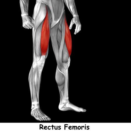 Koncepcyjne 3d human przednia górna noga anatomii mięśni samodzielnie na czarnym tle