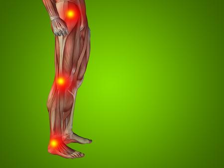 tibia: Conceptual human body anatomy articular pain green background