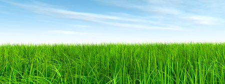 grasslands: 3D conceptual green, fresh natural grass field or lawn, blue sky background in spring or summer banner