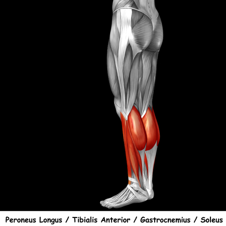 Konzeptionelle 3D Menschlichen Rücken Unteren Bein Muskel Anatomie ...