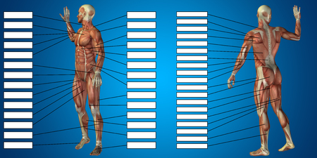 3D man muscle anatomy with text box on blue background