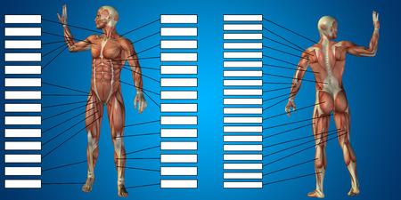 青い背景上のテキスト ボックスと 3 D マン筋の解剖学 写真素材