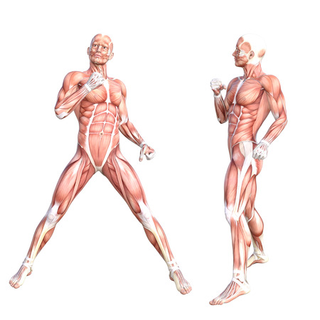 Koncepcyjne anatomii zdrowych skóry ludzki układ mięśni ciała. Athletic m? Odych doros? Ych posing dla edukacji, fitness sport, medycyna wyizolowanych na bia? Ym tle. Biologia nauki 3D ilustracji Zdjęcie Seryjne