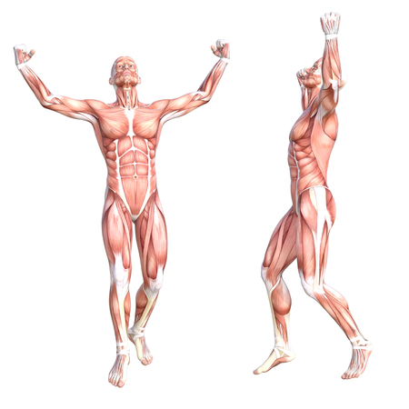 Conceptual anatomy healthy skinless human body muscle system set. Athletic young adult man posing for education, fitness sport, medicine isolated on white background. Biology science 3D illustration Zdjęcie Seryjne