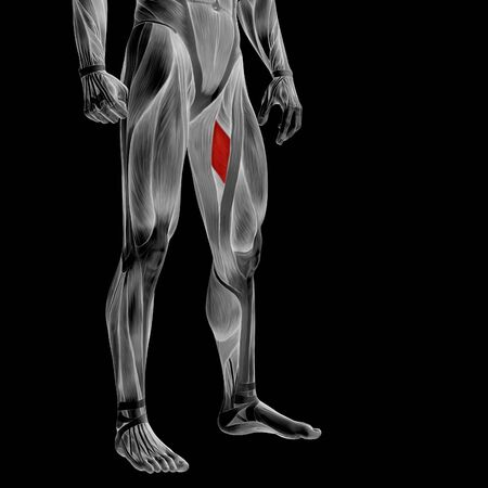details: Conceptual 3D human front upper leg muscle anatomy isolated on black background