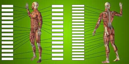 3D man muscle anatomy with text box on green background