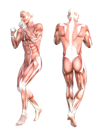Male Anatomy Stock Photos Royalty Free Male Anatomy Images