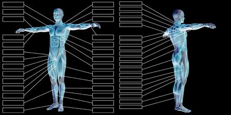黒の背景に分離された本文 3 D 男筋の解剖学