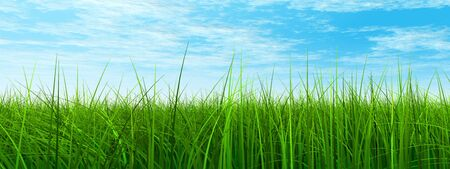 3D conceptual green, fresh natural grass field or lawn, blue sky background in spring or summer banner
