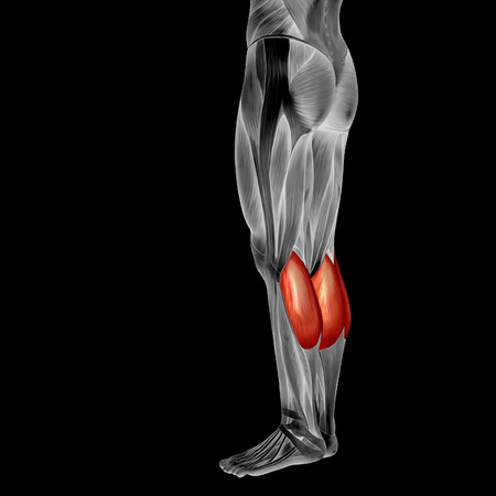 Conceptual 3D human back lower leg muscle anatomy isolated on black background