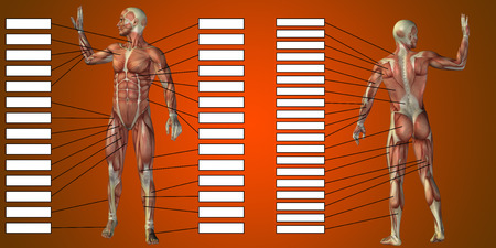 3D man muscle anatomy with text box on red background