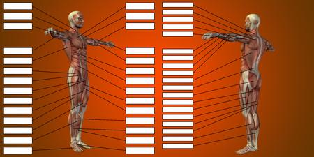 赤い背景にテキストボックスを持つ3D男の筋肉解剖学