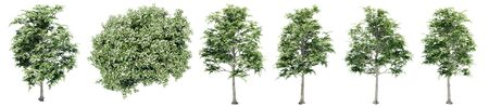 Set or collection of green elm trees isolated on white background. Concept or conceptual 3d illustration for nature, ecology and conservation, strength and endurance, force and life