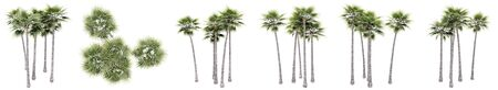 Set or collection of green palm trees isolated on white background. Concept or conceptual 3d illustration for nature, ecology and conservation, strength and endurance, force and life