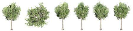 Set or collection of green trees isolated on white background. Concept or conceptual 3d illustration for nature, ecology and conservation, strength and endurance, force and life
