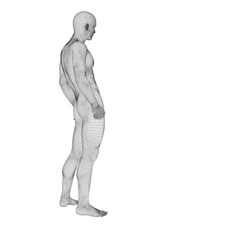 Concept or conceptual 3d wireframe male or man over white background as a metaphor for anatomy, body,  biology, medicine, muscle, mesh, muscular, anatomical, science, education,sport or x-ray