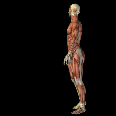 3D human or man with muscles for anatomy or health designs with articular or bones pain. A male isolated on black background Banco de Imagens - 156190635