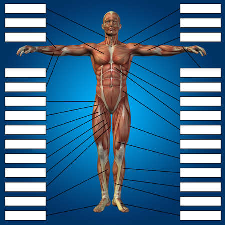 Concept or conceptual 3D male or human anatomy, a man with muscles and textbox on blue gradient background for body, tendon, spine, fit, builder, strong, biological, skinless, shape, muscular posture Banco de Imagens - 155960090