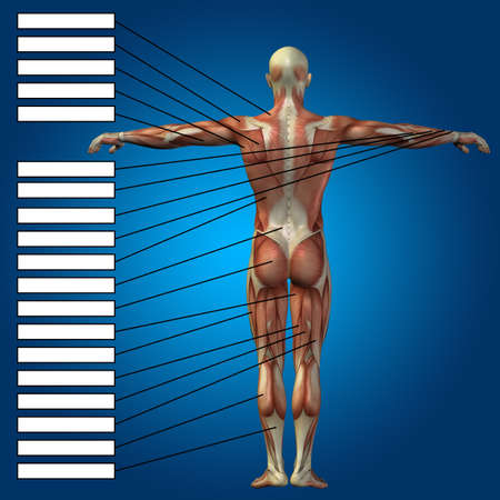 Concept or conceptual 3D male or human anatomy, a man with muscles and textbox on blue gradient background for body, tendon, spine, fit, builder, strong, biological, skinless, shape, muscular posture