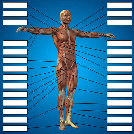 Concept or conceptual 3D male or human anatomy, a man with muscles and textbox on blue gradient background  metaphor to body, tendon, spine, fit, builder, strong, biological, skinless, shape, muscular 写真素材