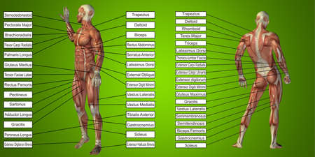 Concept or conceptual 3D male or human anatomy, a man with muscles and textbox on green background  metaphor to body, tendon, spine, fit, builder, strong, biological, skinless, shape, muscular