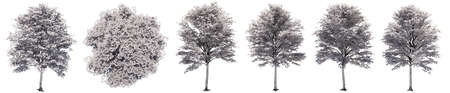 Set or collection of drawings of Maple trees isolated on white background . Concept or conceptual 3d illustration for nature, ecology and conservation, strength and endurance, force and life Standard-Bild