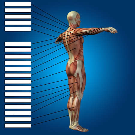 Concept 3D male or human anatomy, a man with muscles and textbox on blue gradient background for body, tendon, spine, fit, builder, strong, biological, skinless, shape, muscular posture health medical