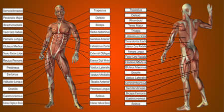 3D illustration of a concept human man anatomy and muscle for sport and textbox on red background for body, tendon, spine, fit, builder, strong, biological, skinless, shape, posture, health medical