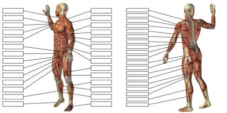3D illustration of a concept human man anatomy and muscle textbox isolated on white background metaphor to body, tendon, spine, fit, builder, strong, biological, skinless, shape posture health medical