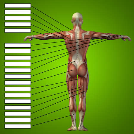 Concept conceptual 3D human anatomy and muscle text on green gradient background Standard-Bild