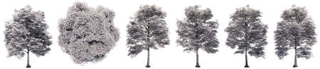Set or collection of drawings of Elm trees isolated on white background . Concept or conceptual 3d illustration for nature, ecology and conservation, strength and endurance, force and life Banco de Imagens - 159527333