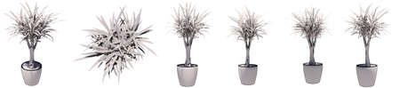 Set or collection of beautiful drawings of interior plants isolated on white background. Concept or conceptual 3d illustration for nature and ecology, beauty and gardening Banco de Imagens - 159527337