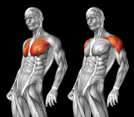 Concept or conceptual 3D chest human anatomy or anatomical and muscle isolated on black background metaphor to body, tendon, spine, fit, abs, strong, biological, gym, fitness, skinless, health medical Banco de Imagens